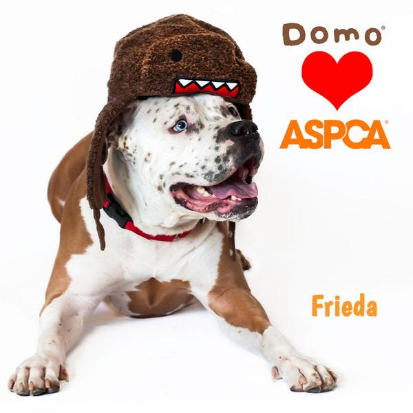 Operation find Frieda a home: she loves to play w her human friends & dress up! http://t.co/YdPerqHkz1 @ASPCA #ASDM http://t.co/Yz9MJi4egr