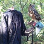 """@KSUOwlNation: Sturgis got in the Halloween spirit earlier this week! #goksuowls http://t.co/tbDekjxELW"" Be careful STURGIS!"