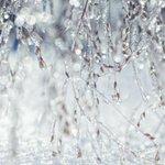 RT @GlobalEdmonton: Freezing rain warning for Spruce Grove, areas northwest of #yeg: http://t.co/1oAPXm0any #yegwx http://t.co/SU8PyKU06K