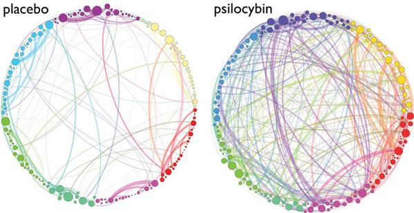This is your brain (left). This is your brain on psychedelic mushrooms (right). http://t.co/48PPQjPz6N http://t.co/0tKQiwm3MG
