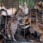 RT @JornalOGlobo: Polícia encontra 150 gatos em uma casa em Nova York. http://t.co/5gRmCOHTO4 http://t.co/OBbGoKVSJZ
