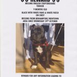 Apparently Ace was taken from his backyard in Berhampore #Wellington yesterday :-( Reward Offered http://t.co/FQt7RjVUPr
