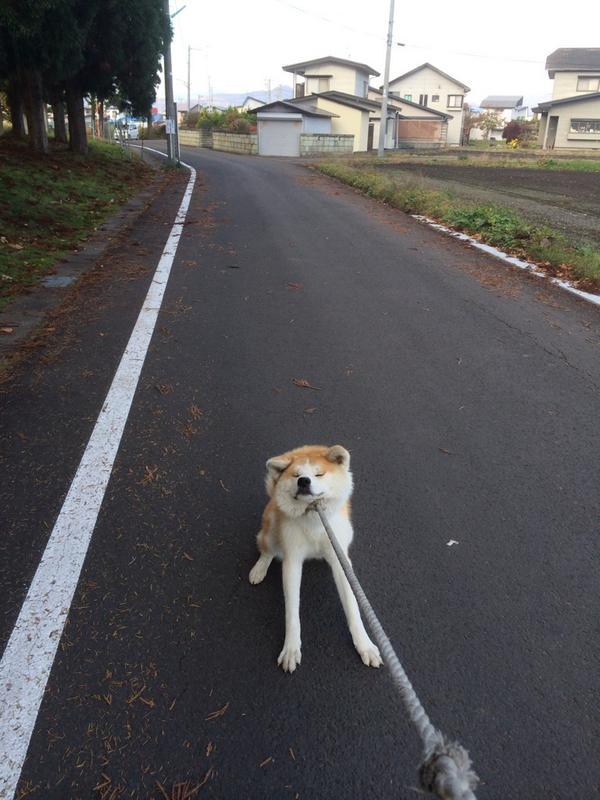 【画像】 犬を飼ったことのある人にしかわからない画像が話題に これどういう意味なの?
