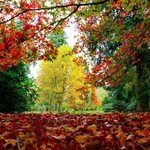 RT @bbcmtd: Check out our stunning selection of autumnal photographs from our viewers http://t.co/xWRydp0M5V Please keep sending! http://t.co/K1A4iz0gyN