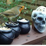 RT @WildlifeGadgets: The birds are getting into the #Halloween spirit on one of my new spooky feeders! @BBCSpringwatch #MyAutumn http://t.co/D4iQMIEi2P