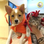 Look at this! Pets @Wischumane ready for Halloween. @WISN12News http://t.co/skmM91Csw2