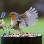 This is SPARTA!!! http://t.co/4s4HKx59lm