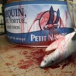 RT @greenpeacefr: ACTION Petit Navire, arrêtes le carnage! Chaque année, ce sont 960 000 requins soyeux qui sont victimes des DCP http://t.co/SHLkBgunYy