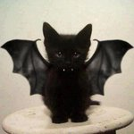Today is #NationalCatDay and its Halloween tomorrow so heres a little halloween cat! http://t.co/o68ieCA4Xm
