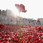 RT @IndyVoices: Londons sea of poppies is a beautiful monument to the fallen of World War I http://t.co/oGQyxOgg9v http://t.co/W95Sqiccu5