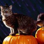 Цифра дня. Сколько россиян не празднуют Хэллоуин http://t.co/JyqAtujNZh http://t.co/DIdAjOiAm9
