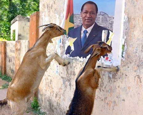 1 picture + 2 goats = 1,000 words. #BurkinaFaso #Iwili http://t.co/cI0LyNG3RM