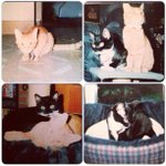 Miss these two idiots running round! Duke & Pepsi ???? #NationalCatDay http://t.co/RctPpQC4Kk