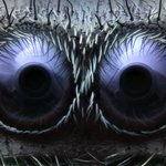 Check out this year's top microscope images, like this one -- which is real! -- of spider eyes http://t.co/Jz6155C4T1 http://t.co/54MTrNRxlV