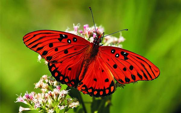 There is nothing in a caterpillar that tells you it's going to be a butterfly.    -- Buckminster Fuller  #Diversity http://t.co/cCcIhHsoIu
