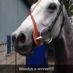 Delighted little woody got his head in front @ClonmelR today!! @SupremeHorseRac http://t.co/TthJozIckw