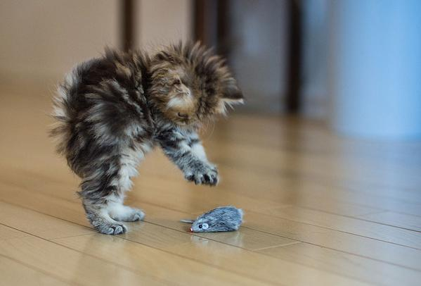 Kitty Playtime http://t.co/T1o0nW7xRH