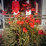 Everywhere you turn in #Albany this morning there are poppies. Real, knitted, hand drawn #AnzacAlbany #wanews http://t.co/PvhYmBhV43