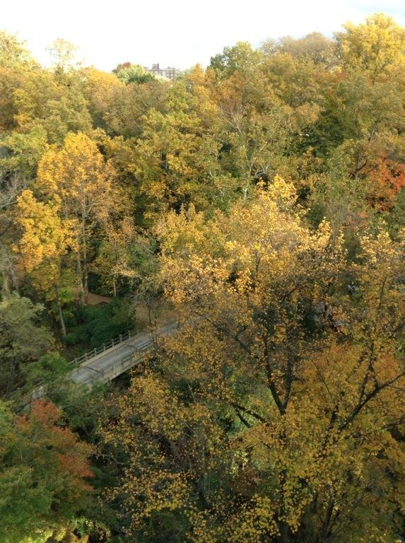 Rock Creek Park dressed in gold. http://t.co/WQNjInofLR