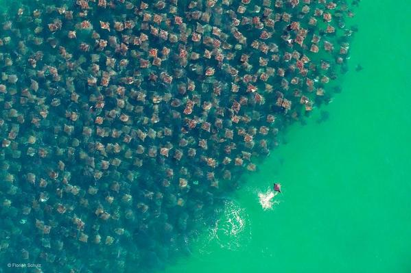 Devil Rays, Baja California Sur, Mexico http://t.co/Yn0H8XemkL