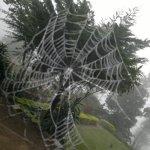 Cobweb in the mist... By @uthpala_jay. #lka #SriLanka #FanPhotos http://t.co/KOUeAQpdzU