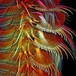 Check out this year's top microscope images http://t.co/2ggRQnE3Ud http://t.co/bLFyzDxzYN