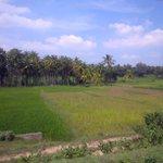 Enroute to Mysore - out of city limits. Beautiful Karnataka.