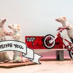 "Hmm mice wheelies. Interesting ""@nytimes: DIY taxidermy may be for you, if you have the guts. http://t.co/Ia0dcn94E8 http://t.co/ONd8TL1qa2"""