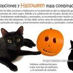 """""""Tomorrow is Halloween"""" no des en adopción gatitos negros, hay mucho loco por ahí. #TeniaQueTuitearlo http://t.co/yYFfyAc7Lw"""