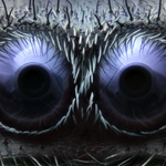 Awesome. Also terrifying. MT @washingtonpost: close-ups of spider eyes and a crickets tongue http://t.co/bhSbpoWUM9 http://t.co/kVmqsK18sz