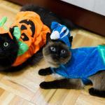 ハッピーハロウィーン!#ハロウィン #猫画像 #猫 #ネコ #cats #Halloween http://t.co/VkaXQJfsNV