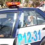"""@UltimaHoracom: Un perro entregó a su amo a la policía http://t.co/ZOSxcMcEAL http://t.co/eOXUMVdKTn"" que caretaso."