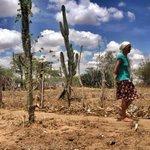 Século passado foi bem melhor, diz produtora rural sobre falta de chuva na Bahia http://t.co/gHA3E0aZfo #G1 http://t.co/nLVpL4hzBd