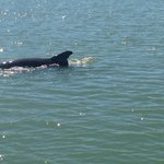 Dolphin numbers decline in St. Pete area http://t.co/tmNoPV0BmF @Bobby_L http://t.co/XGohOewl8T