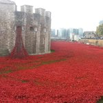Poppy field at Tower of London http://t.co/4qGouHoiNu
