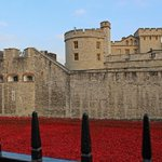 Yesterday I went to see the poppies at the Tower of London. Full gallery here: http://t.co/FjRDUez3MX http://t.co/nndcqpKyve