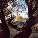 متى تُبصِرِ القدسَ العتيقةَ مَرَّةً فسوفَ تراها العَيْنُ حَيْث تُديرُها #القدس #فلسطين #جمعة_مباركة #محمد_عساف Admin http://t.co/CDsvjB7eHa