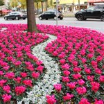 Blütenpracht in #Aachen http://t.co/tNC2vY9sTU