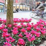 #Aachen goes Pink ;-) November? Von wegen! Lieben Dank an unseren Stadtbetrieb – sieht klasse aus !!! http://t.co/LtxXhzF63s