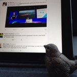 This little fellow is tweeting to support giga data & fab fibre optics 4 Dunedins future success!#gigatowndunedin http://t.co/9C2KdqsWZU