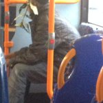 A man on the bus has leaves attached to his hat?? #WorstCamouflageEver #sheffieldissuper http://t.co/xW6b8T3wCd