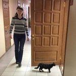 Приехал в г. Ульяновск. Секретарь пригласила Истца войти в зал заседаний. Кот невозмутимо подчинился. Ок, поработаем. http://t.co/gnGNrc1Wbb