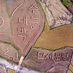 [#핫포토] 충남 보령 토정체험마을 주민들이 논 10㏊에 벼 줄가리로 수능 대박, 만세보령이라는 글자를 만들어 이색 풍경을 제공하고 있습니다. http://t.co/PRDqmYunpz http://t.co/PPaE6OnbkY