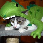 Dont feed pets chocolate at Halloween- even if they give you the look http://t.co/1irNiGK1N8 Pic: Malingering/Flickr http://t.co/33xzvKXbrJ