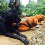 Sniffer Dogs join Rescue Op #KoslandaLandslide Sri Lanka #LKA Little break! #Koslanda Photo @Upendrabbb http://t.co/nzMcbzhCF0