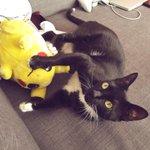 """Fuck, me ha pillado maltratando a Pikachu, haz como si no supieras nada 😶"" http://t.co/G7xU8aEKhp"