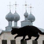 Na Hungria, gatos pretos têm proteção contra sacrifícios no Halloween http://t.co/nh0wxejivI #G1 http://t.co/EYJmyBc5JC