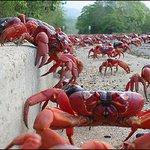Fila gigante para compra de ingressos na Ilha do Retiro... http://t.co/9syKVR8zcs