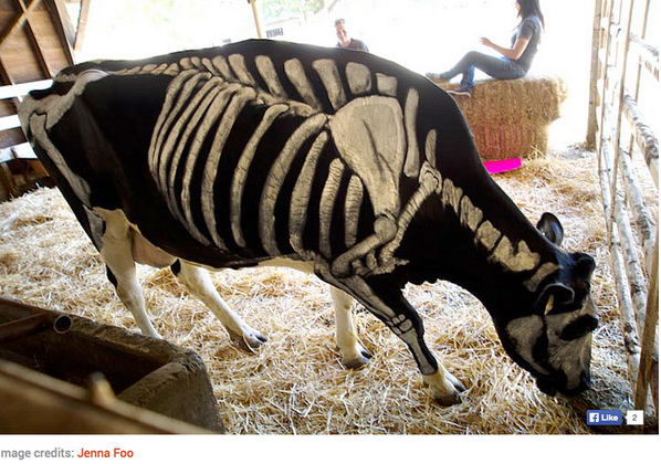 WOW! RT @JFSAssociates: Happy #halloween to all! Even the cows are in on the act! (non toxi-animal friendly paint) http://t.co/zXi2j4SEWb