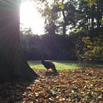 When reality is so perfect that it seems unreal - The Harcourt Arboretum @OBGHA @UniofOxford #oxford http://t.co/bb0YaatIOt